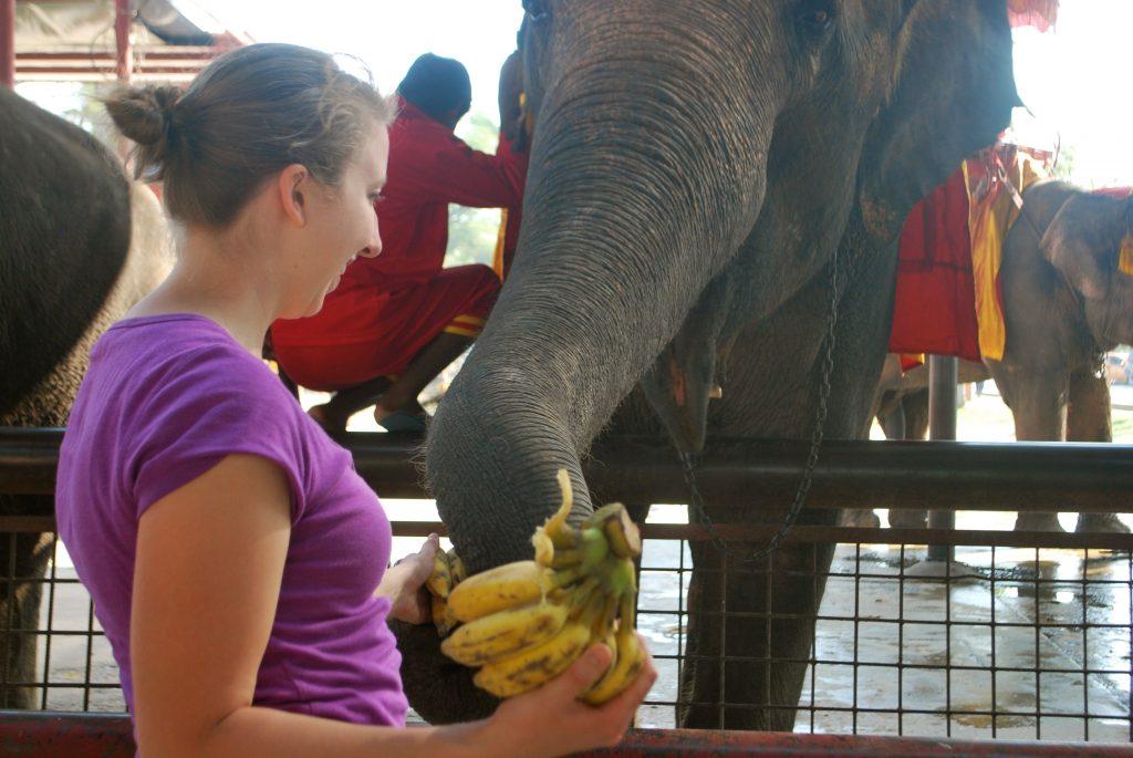 Rebecca feeding an elephant bananas in Thailand | for Thai beef bowl